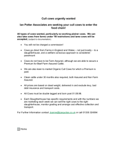 Cull Cows Wanted - Ian Potter Associates