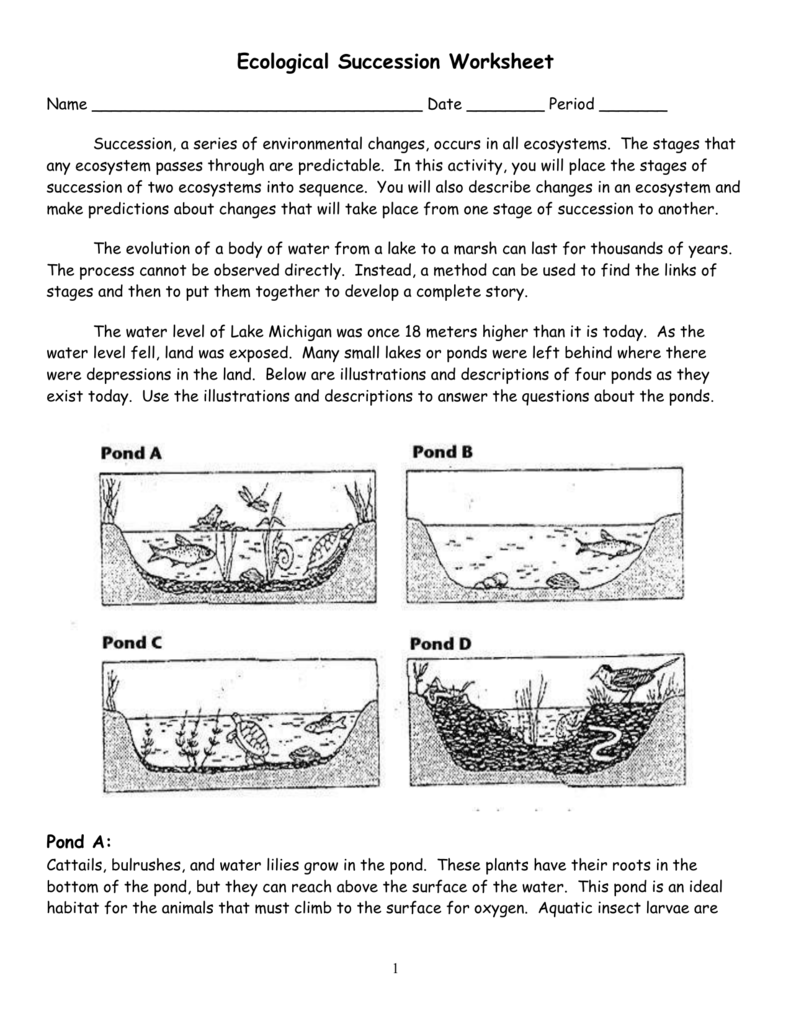 worksheet Ecosystems Worksheet ecological succession worksheet 28 images ecology worksheets reviewrevitol