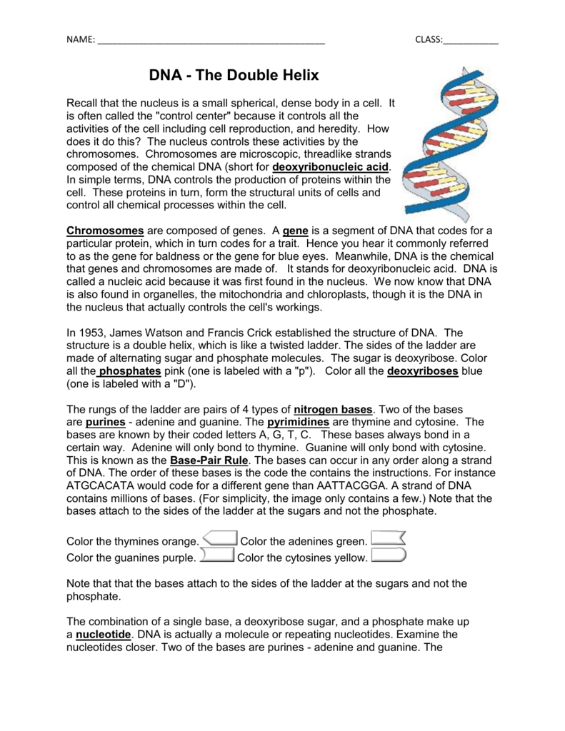 Worksheets Dna Double Helix Worksheet dna coloring