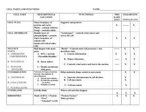 Cell Organelle Table