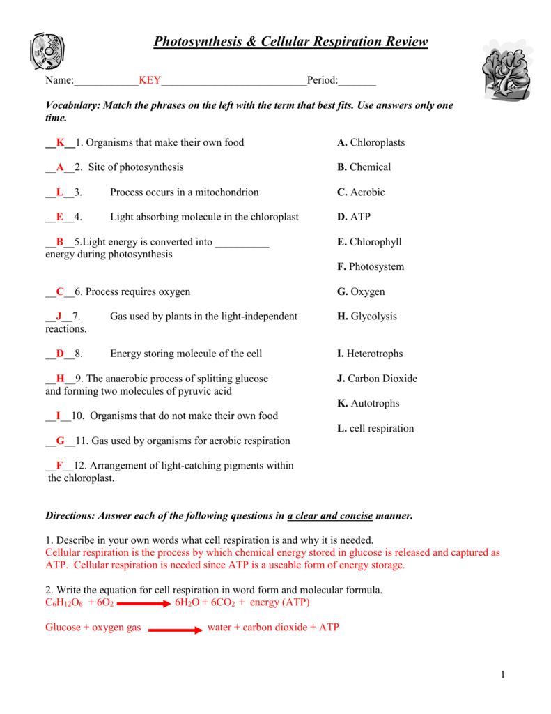 Worksheets Cellular Respiration Worksheet photosynthesis cellular respiration worksheet