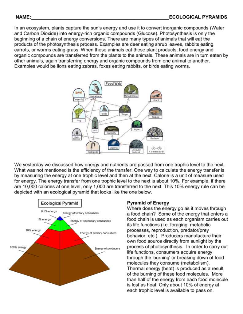 food chains, food webs and ecological pyramids