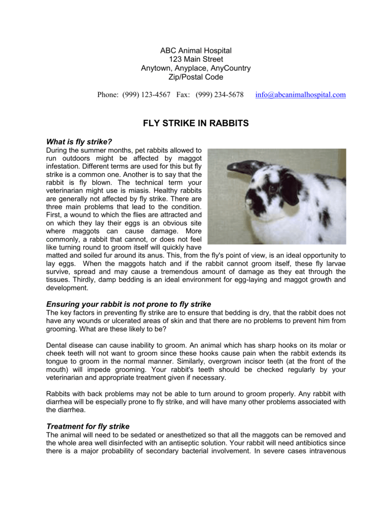 FLY STRIKE IN RABBITS - Alpine Animal Hospital