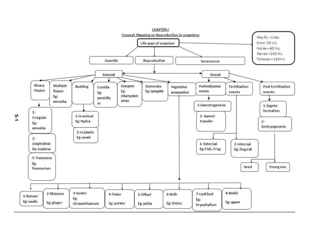 types of disease transmission concept map answers Concept Map