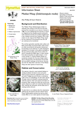 Dolichovespula media - The Median Wasp