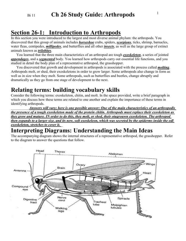 ch 28 study guide arthropods rh studylib net Mollusca Characteristics Phylum Arthropoda Characteristics