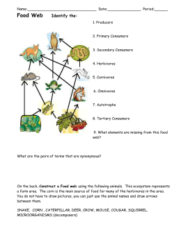 Constructing a Food Web and Energy Pyramid