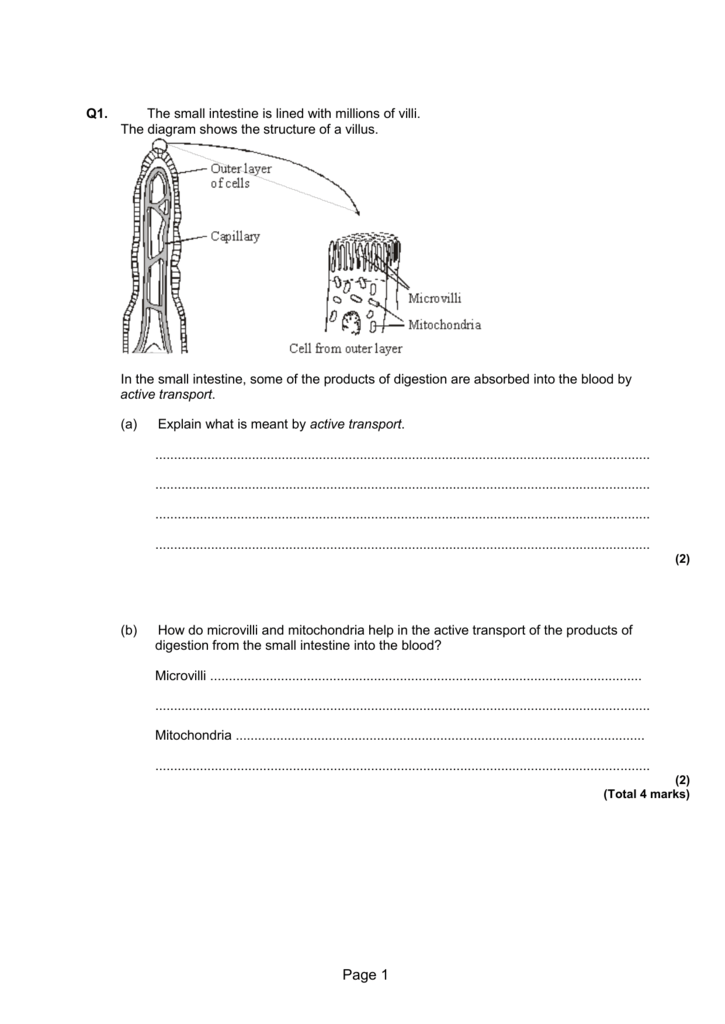 More B3 Cell Transport Questions