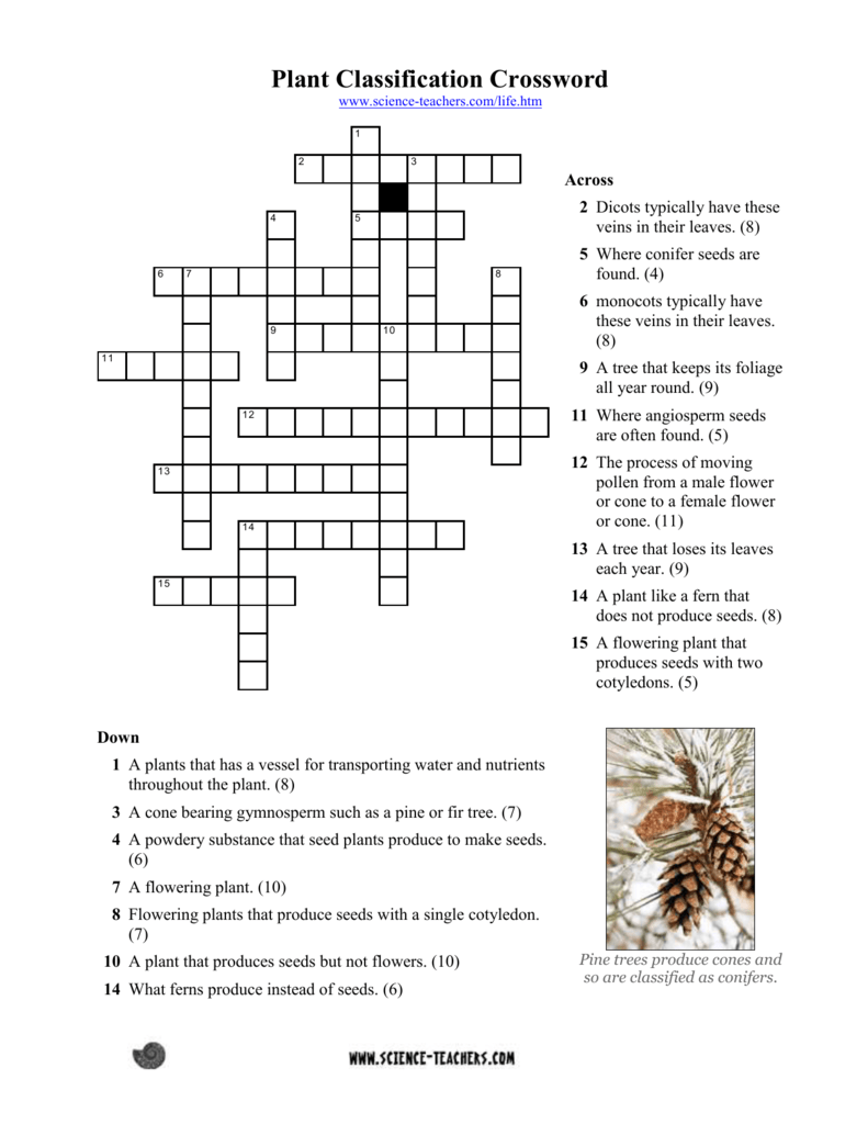 Plant classification cloze science teacher resources pooptronica