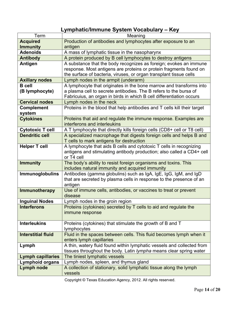 Worksheets Immune System Worksheet lymphaticimmune system vocabulary key