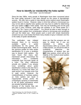 How to Identify (and misidentify) the hobo spider