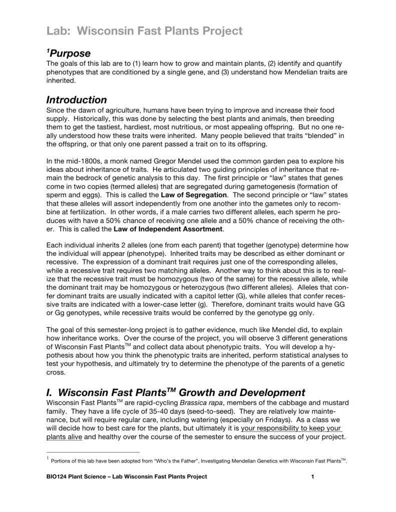 mendelian genetics lab report