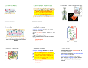 Capillary exchange Fluid movement in capillaries Lymphatic system