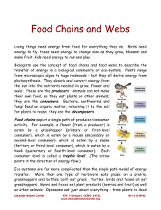 Food Chains and Webs - Lakeside Nature Center