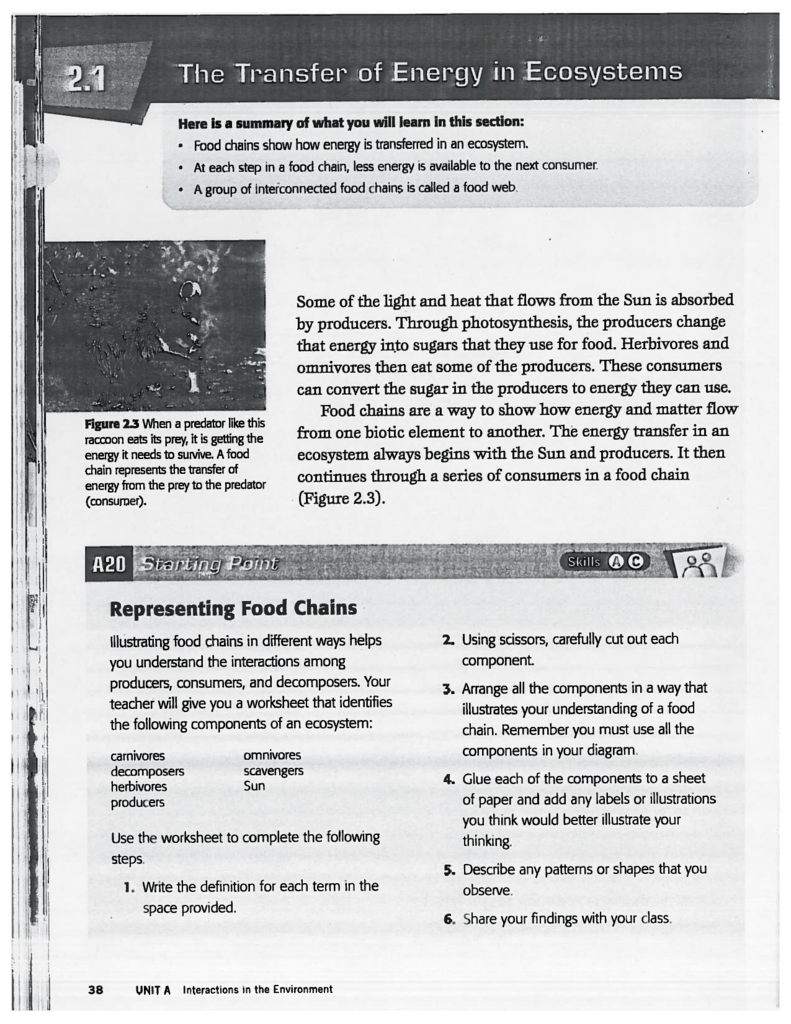 Worksheets Producers Consumers And Decomposers Worksheet representing food chains