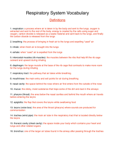 resp_pkt_pdf_files/respiratory vocabulary sheet answers PDF