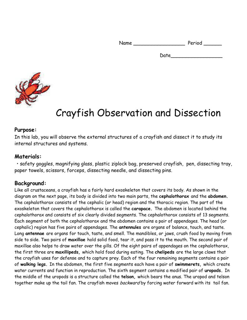worksheet crayfish dissection worksheet answers grass fedjp worksheet study site. Black Bedroom Furniture Sets. Home Design Ideas