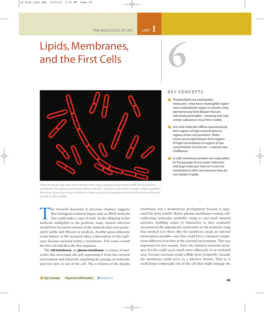 Lipids, Membranes, and the First Cells