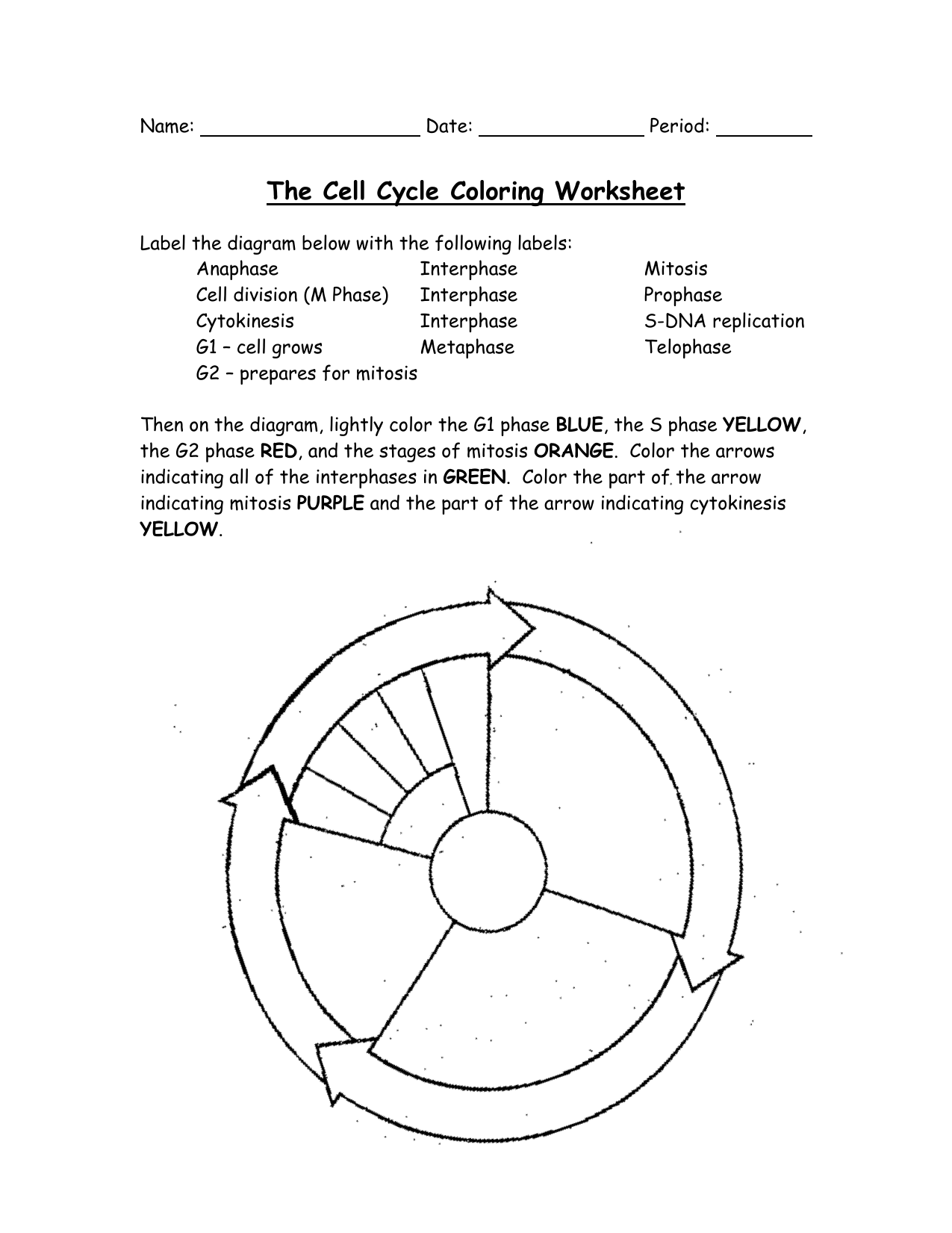 The Cell Cycle Coloring Worksheet Key Deployday – Phases of Mitosis Worksheet