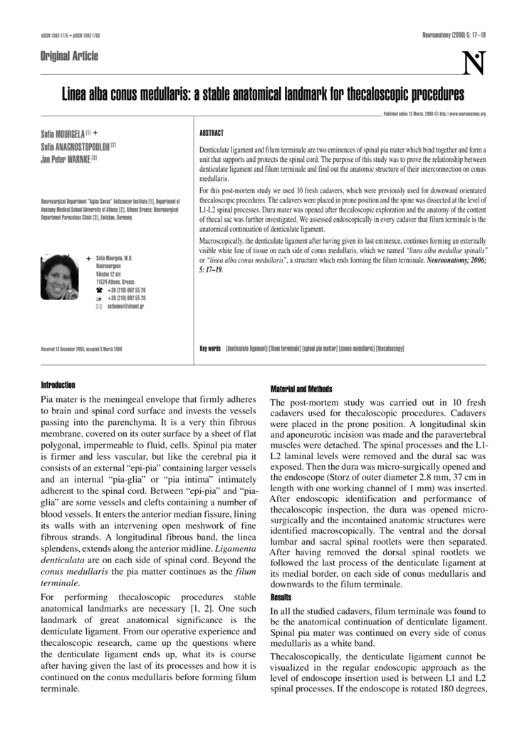 Linea alba conus medullaris: a stable anatomical