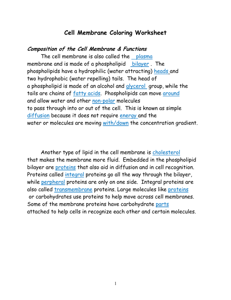 {Cell Membrane Answer Key – Cell Membrane Coloring Worksheet