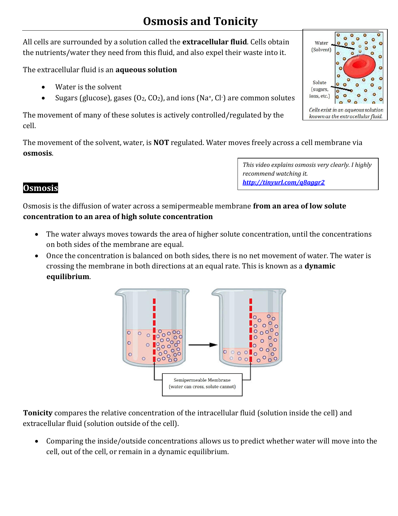 Osmosis and Tonicity Note – Tonicity and Osmosis Worksheet