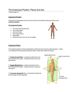 The Anatomical Position, Planes and Axis