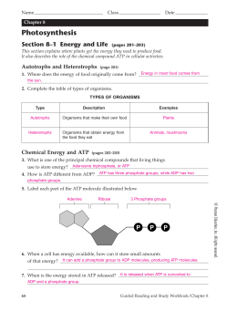 Chapter 7 1 life is cellular worksheet answers