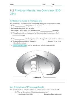 Chloroplast worksheets key 82 photosynthesis an overview 230 ccuart Image collections