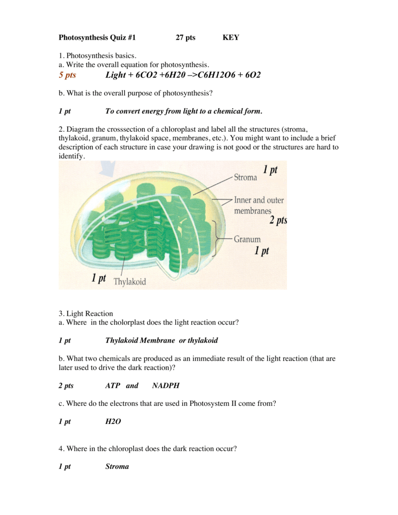 Photosynthesis Quiz 1 Key
