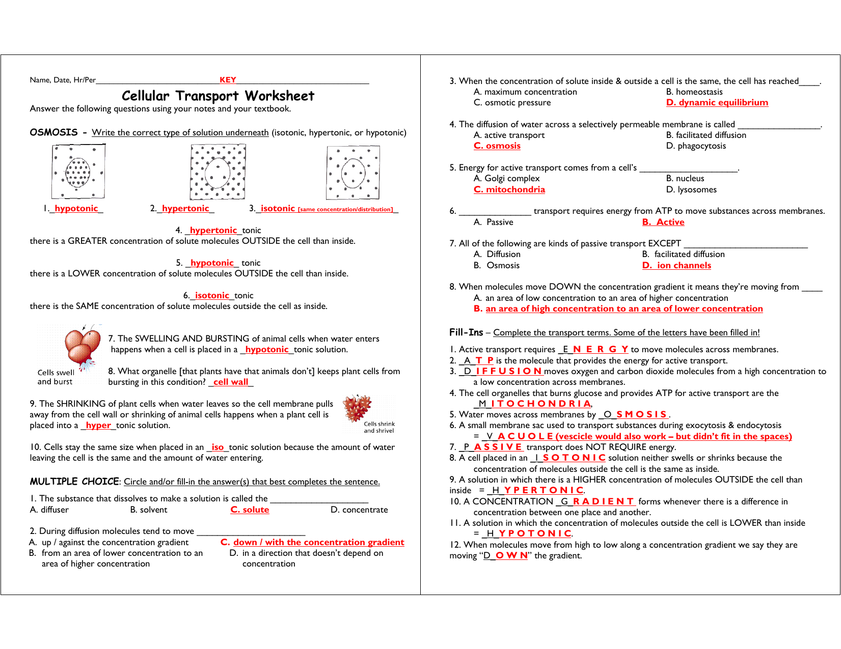 Diffusion Osmosis And Active Transport Worksheet Answers ...
