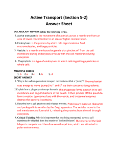 Active Transport (Section 5-2) Answer Sheet