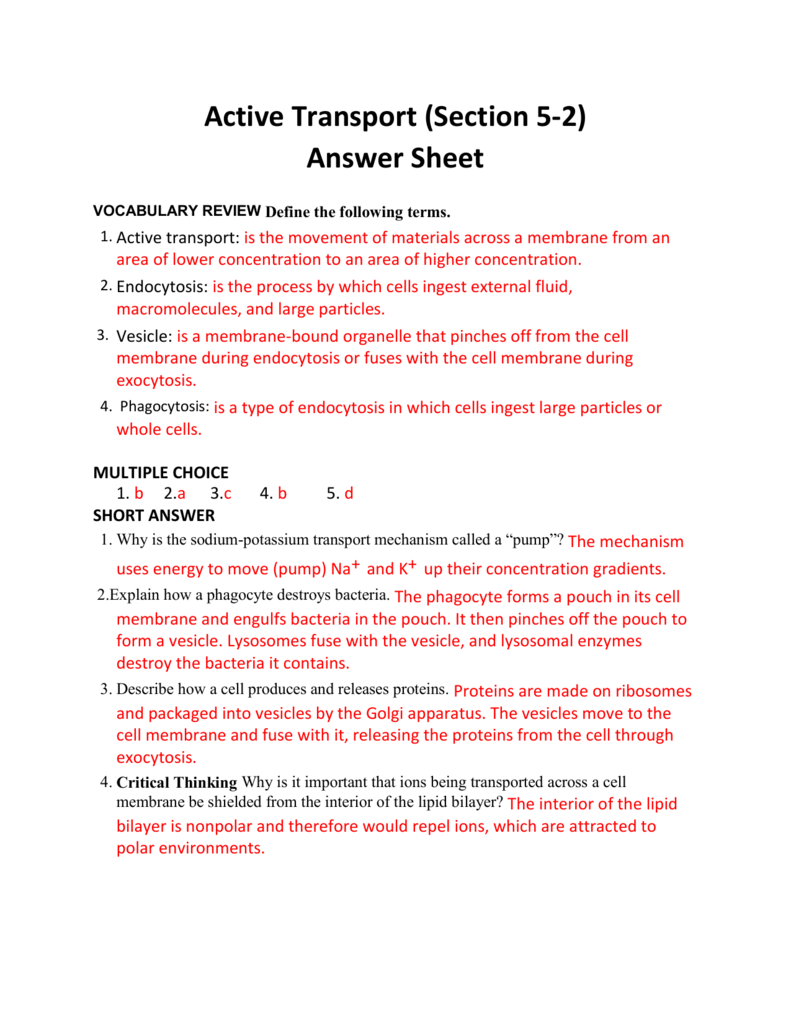worksheet Active Transport Worksheet Answers active transport section 5 2 answer sheet