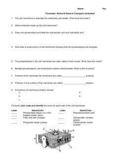 Mitosis Worksheet & Diagram Identification