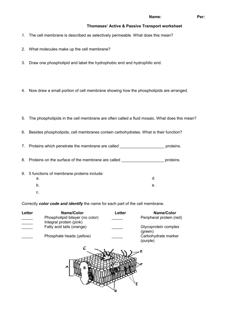 Name Per Thomases Active Passive Transport Worksheet 1 The
