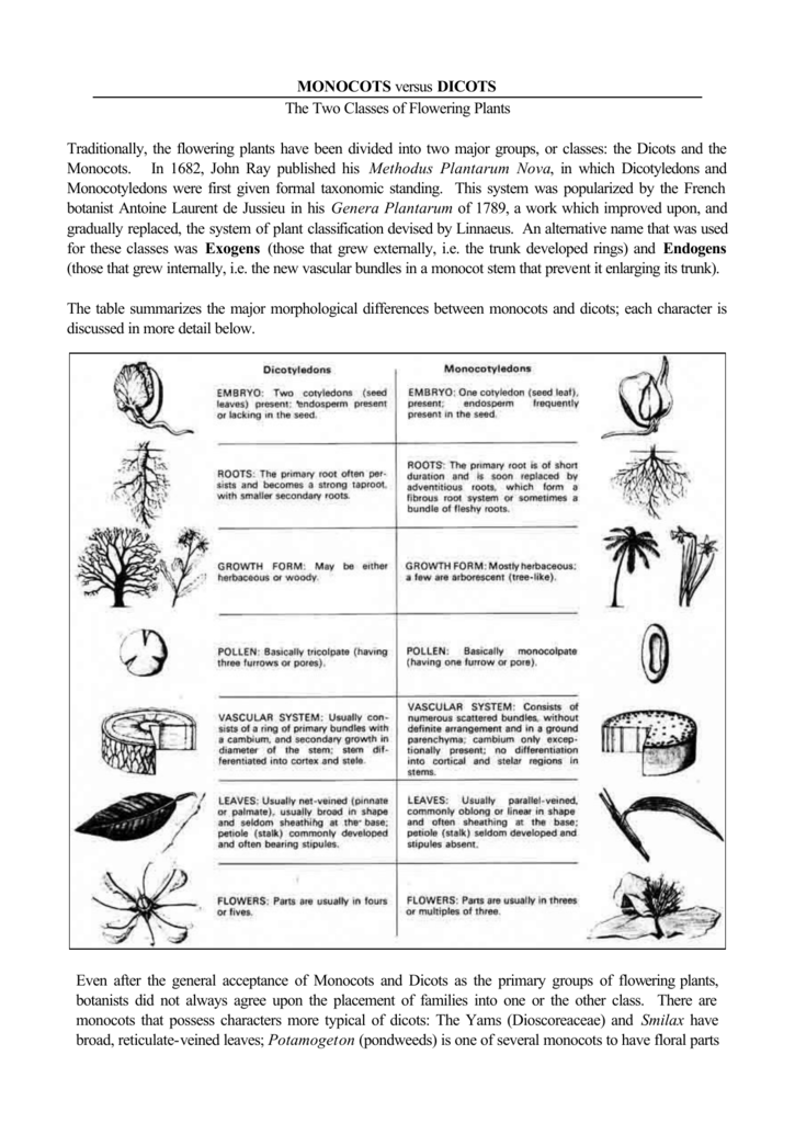 Monocots Versus Dicots The Two Classes Of Flowering Plants