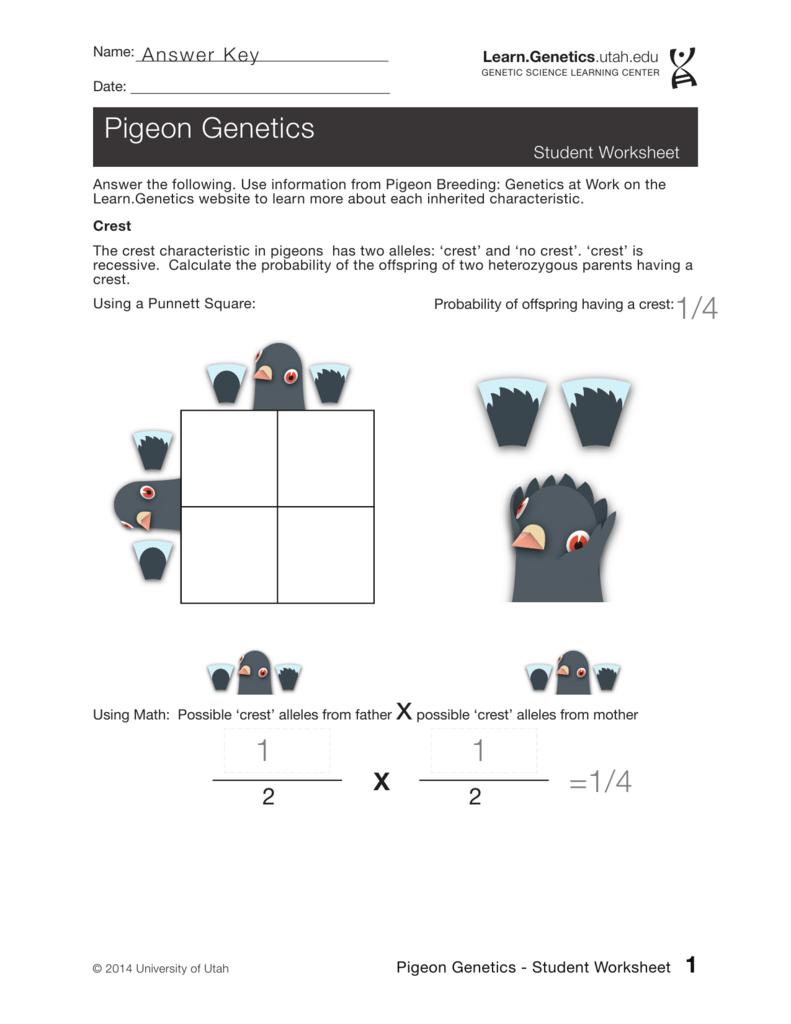 Pigeon Genetics Worksheet Answer