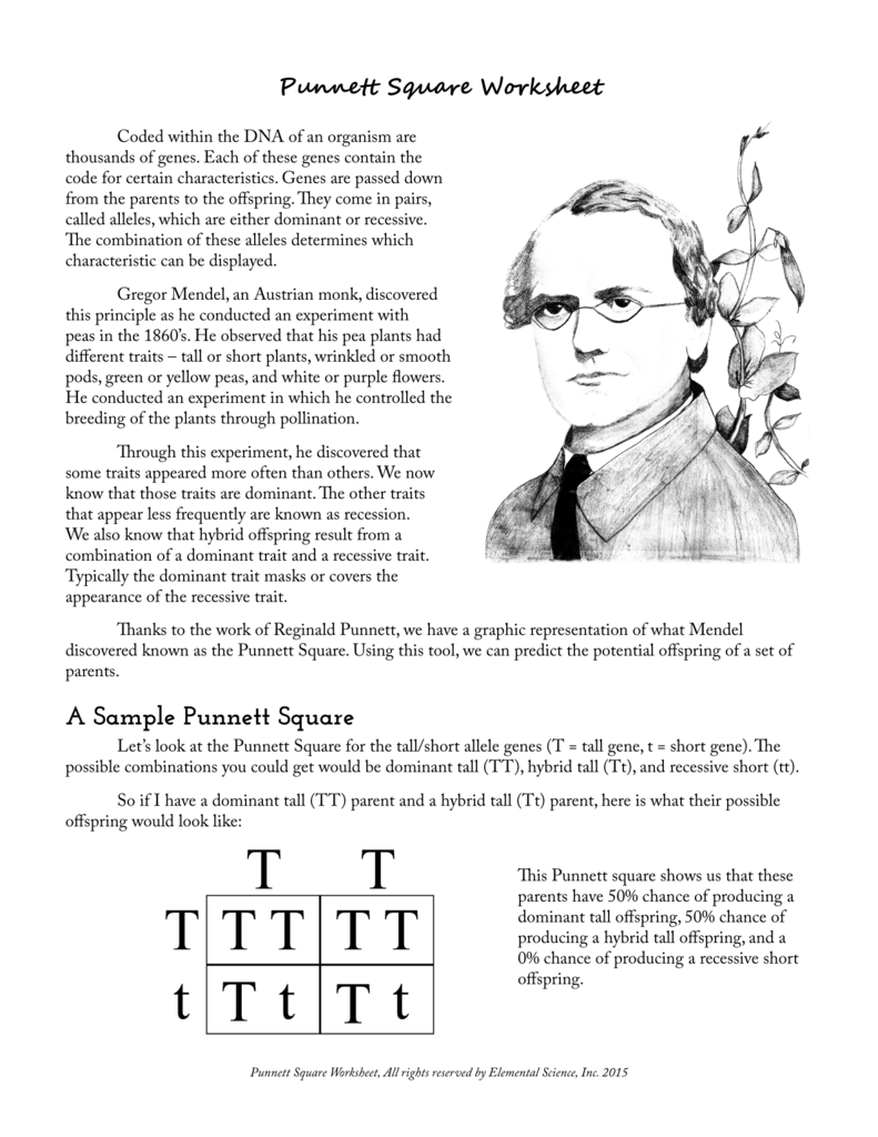 worksheet Gregor Mendel Worksheet punnett square worksheet