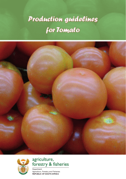 Production guidelines: Tomato