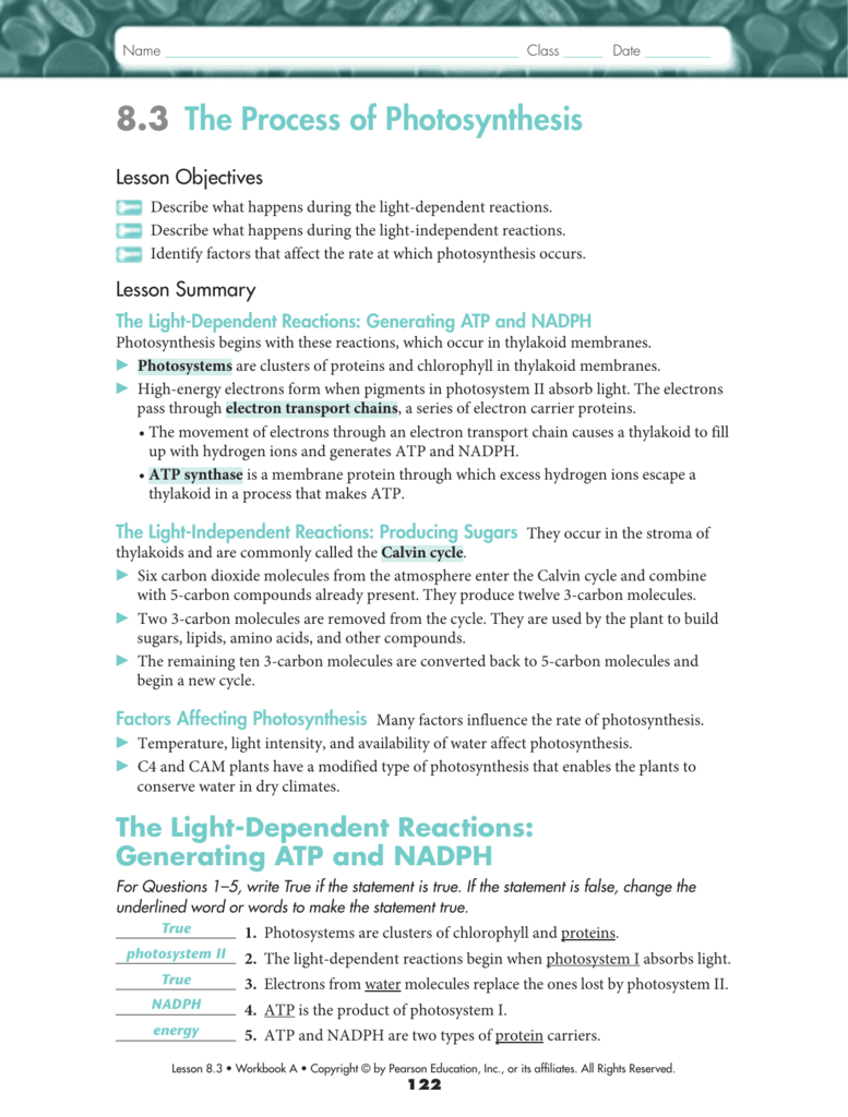 Uncategorized Pearson Education Inc Worksheet Answers 8 3 the process of photosynthesis