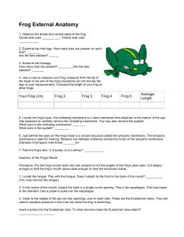 Frog Anatomy Study Guide Answer Key