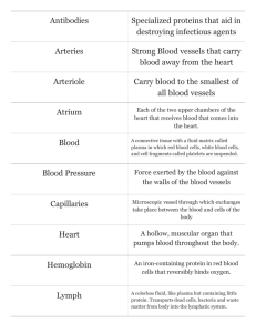 Print › Cardiovascular/Circulatory/Lymphatic Systems | Quizlet