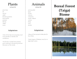 Boreal Forest (Taiga) Biome Plants Animals