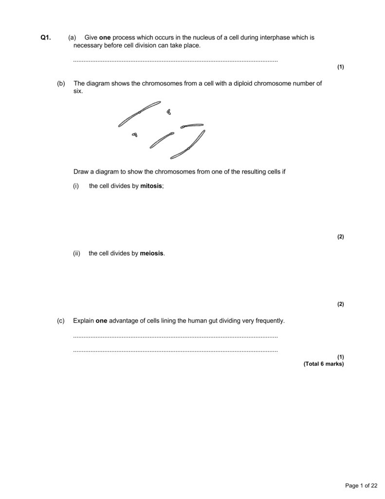 Uncategorized Mitosis Worksheet And Diagram Identification Answers q1 a give one process which occurs in the nucleus of cell during