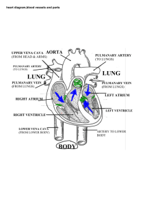 heart diagram,blood vessels and parts