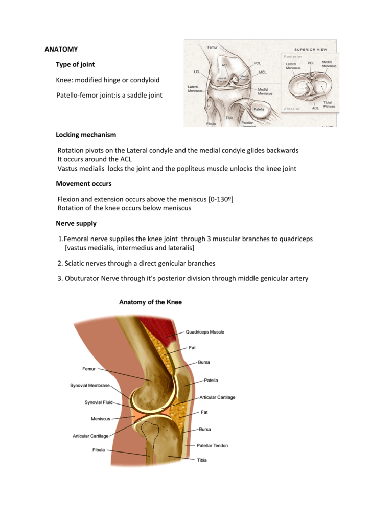 Anatomy type of joint knee modified hinge or condyloid patello ccuart Choice Image