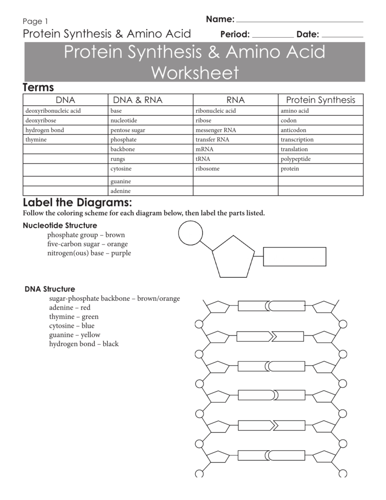 Protein Synthesis Worksheet - Calleveryonedaveday