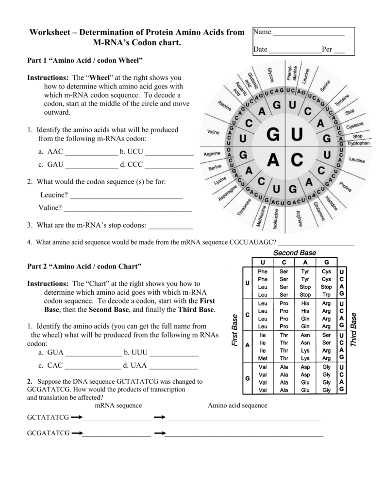 Worksheets Codon Worksheet mrna codon chart worksheet circle dna sequence