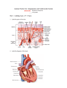 Anatomy Practice Test - Integumentary and Cardiovascular Systems