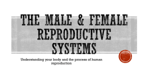 2. Male/Female Reproductive System Notes